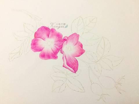 彩铅插画手绘花瓣